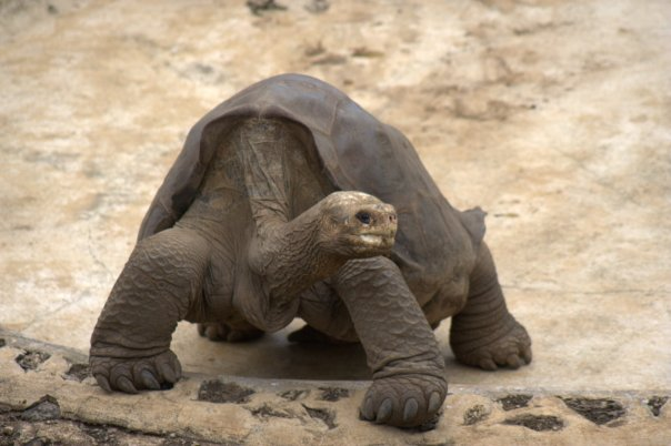 Lonesome George. Rest in Peace.